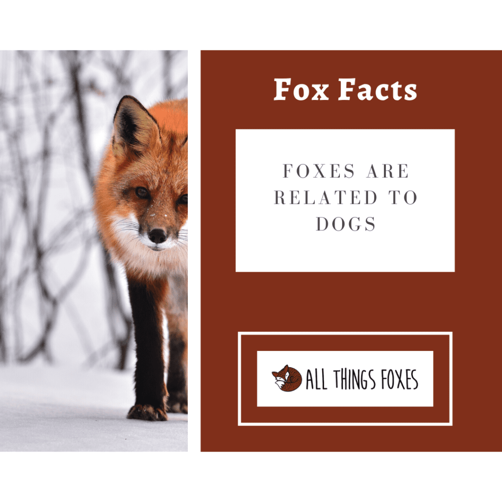 fox-facts-dogs