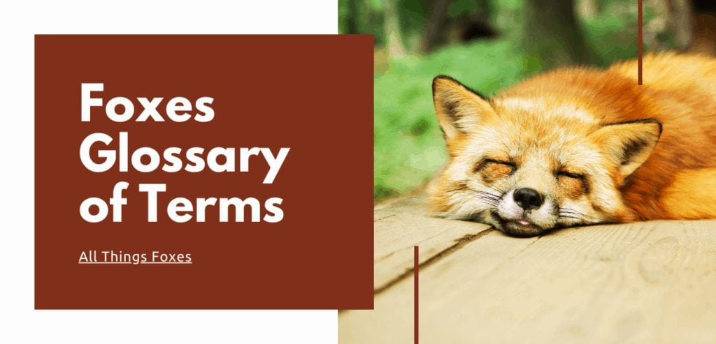 foxes-glossary-of-terms