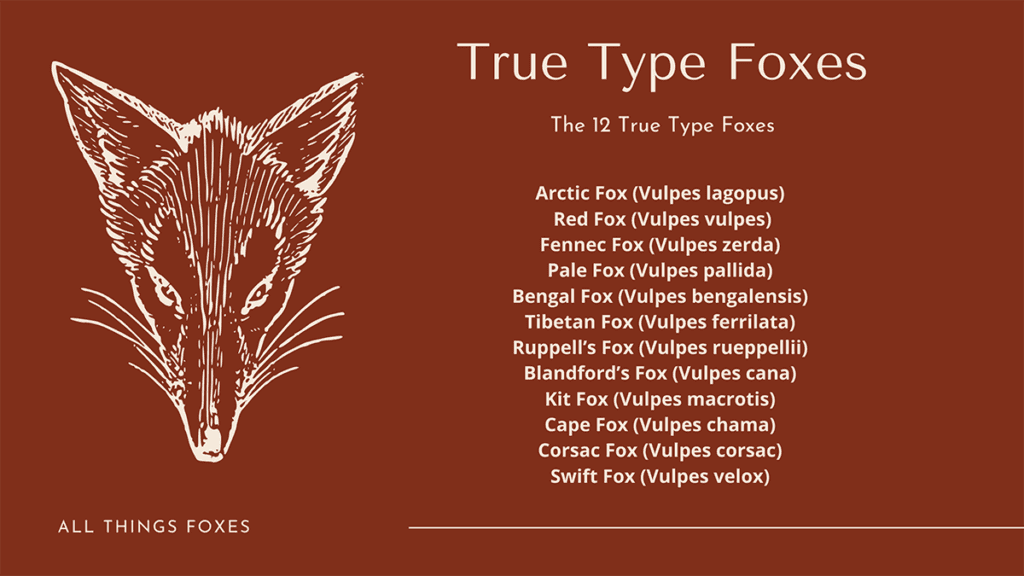 true-type-foxes-list-medium