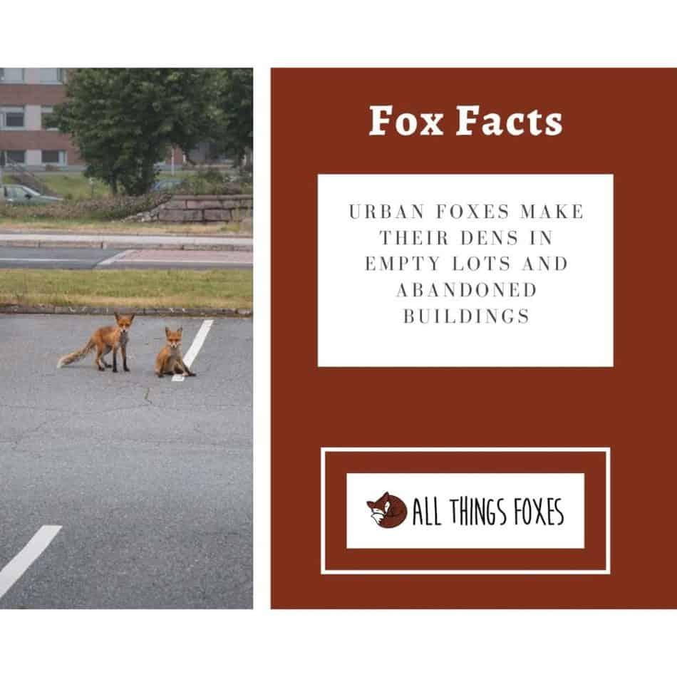urban-foxes-dens